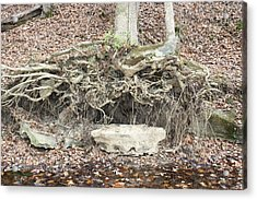 Altar To Nature Acrylic Print by James Collier