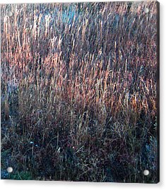 Amazing Grass Two Acrylic Print by Ric Soulen