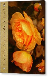 Amber Queen Rose Acrylic Print by Jenny Rainbow