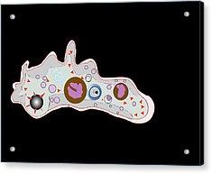 Amoeba, Artwork Acrylic Print by Francis Leroy, Biocosmos