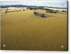 An Aerial View Of Farmland Acrylic Print by Jason Edwards