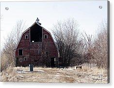 An Old Red Barn Acrylic Print by Yumi Johnson