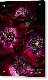 Anemones Acrylic Print by Ann Garrett