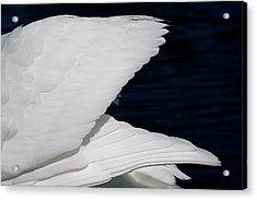 Angel Wings Acrylic Print by Paulette Thomas
