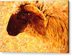 Angora Goat In Abstract Acrylic Print by Wingsdomain Art and Photography