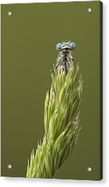 Animal Acrylic Print by Andy Astbury