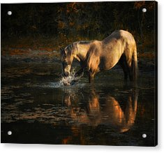 Another Morning At The Pond Acrylic Print by Ron  McGinnis