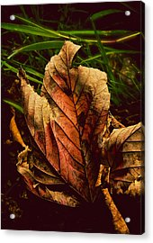 Another Page Turned Acrylic Print by Odd Jeppesen