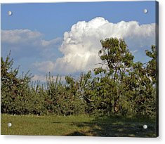 Apple Orchard Acrylic Print by Richard Gregurich