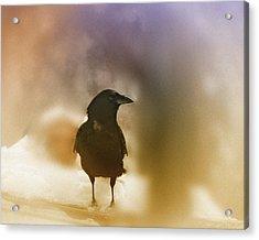 April Raven Acrylic Print by Susan Capuano