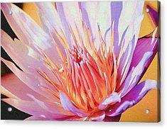 Aquatic Bloom Acrylic Print by Julie Palencia