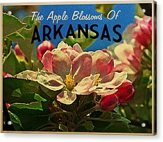Arkansas Apple Blossoms Acrylic Print by Flo Karp
