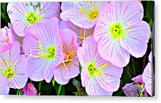 Arkansas Wildflowers Acrylic Print by Marty Koch