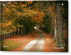 Arrival  Acrylic Print by Cris Hayes