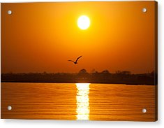 As The Seagull Heads Home Acrylic Print by Karol Livote