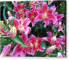 Asiatic Lillies Acrylic Print by Randall Weidner