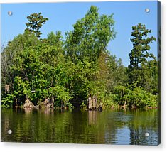 Atchafalaya Basin 46 Acrylic Print by Maggy Marsh