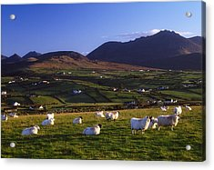 Aughrim Hill, Mourne Mountains, County Acrylic Print by Gareth McCormack