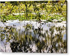 August Reflections Acrylic Print by Rachel Cohen
