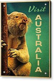 Australia Koala Acrylic Print by Flo Karp