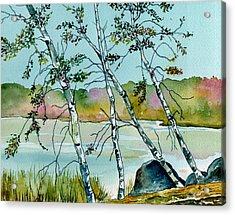 Autumn Birches Acrylic Print by Brenda Owen