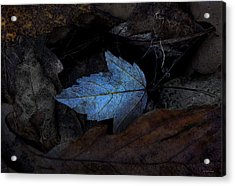 Autumn Blue Acrylic Print by Ron Jones