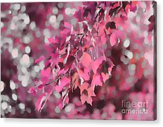 Autumn Blush Acrylic Print by Jeff Breiman