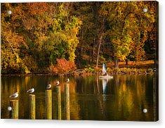 Autumn Day Acrylic Print by Boyd Alexander