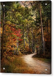 Autumn Forest 2 Acrylic Print by Jai Johnson