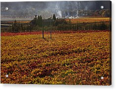 Autumn In Napa Valley Acrylic Print by Garry Gay