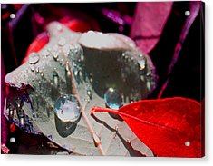 Autumn Menagerie  Acrylic Print by Marie Jamieson