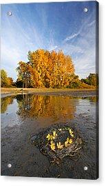 Autumn Nest Acrylic Print by Mircea Costina Photography