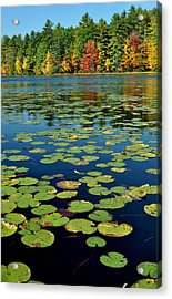 Autumn On The River Acrylic Print by Rick Frost