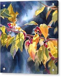 Autumn Plums Acrylic Print by Sharon Freeman