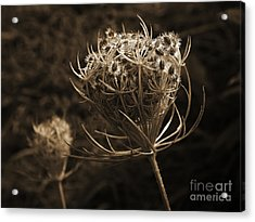 Autumn Pod Acrylic Print by Jim Wright