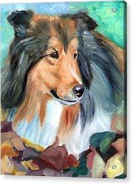 Autumn - Shetland Sheepdog Acrylic Print by Lyn Cook