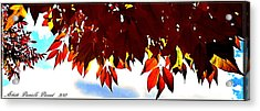 Autumn Sun Glory Acrylic Print by Danielle  Parent