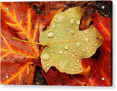 Autumn Treasures Acrylic Print by Matthew Green
