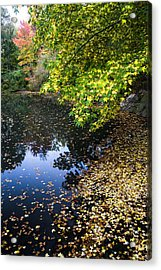Autumn Tree Colors In Central Park In New York City Acrylic Print by Ellie Teramoto