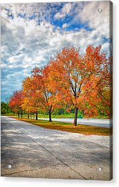 Autumn Trees At Busch Acrylic Print by Bill Tiepelman