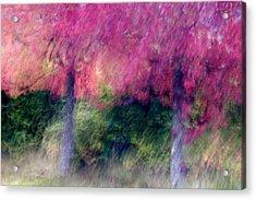 Autumn Trees Acrylic Print by Carol Leigh