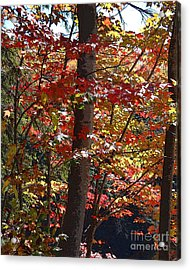 Autumn's Delight Acrylic Print by Diane E Berry