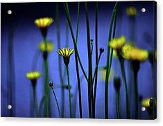 Avatar Flowers Acrylic Print by Mauro Cociglio - Turin - Italy