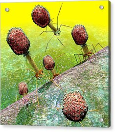 Bacteriophage T4 Virus Group 2 Acrylic Print by Russell Kightley