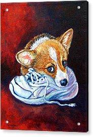 Bad Puppy - Pembroke Welsh Corgi Acrylic Print by Lyn Cook