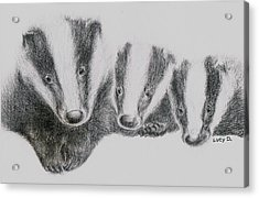 Badgers Acrylic Print by Lucy D