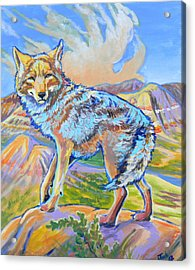 Badland Coyote Acrylic Print by Jenn Cunningham