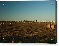 Bales In Peanut Field 9 Acrylic Print by Douglas Barnett