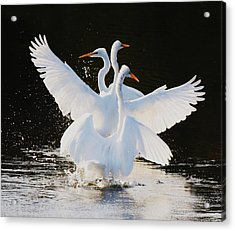 Ballet Acrylic Print by Paulette Thomas