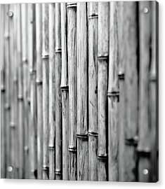 Bamboo Fence Acrylic Print by George Imrie Photography